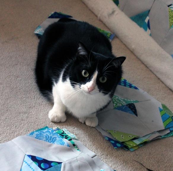 cat inspection